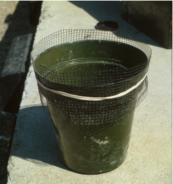 Plant pot with net collar